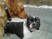 Dog Trotteur